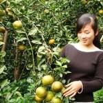 Đặc sản Nghệ An – Cam Vinh: Thưởng thức 1 lần nhớ mãi